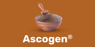 ascogen